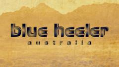 Blue_Heeler